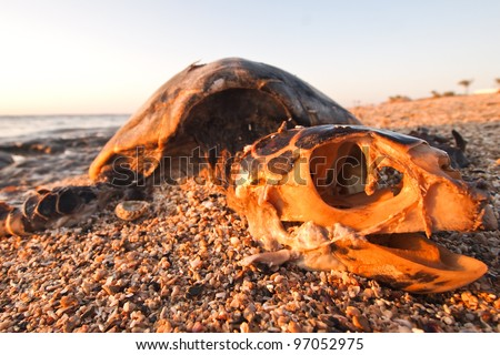 Dead green turtle on the beach - stock photo