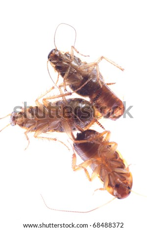dead insect cockroach bug isolated on white - stock photo
