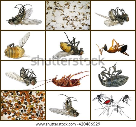 Dead insects. Macro. Isolated on a white background - stock photo