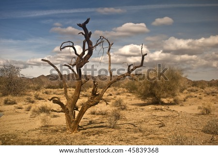 Dead Ironwood Tree from the Mojave Desert at Joshua Tree National Park - stock photo