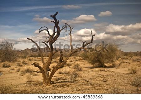 Dead Ironwood Tree from the Mojave Desert at Joshua Tree National Park - stock photo