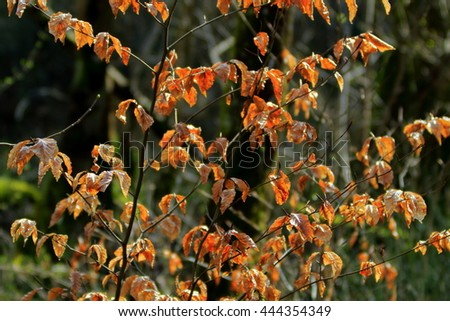 Dead leaves on the tree, in the backlight - stock photo