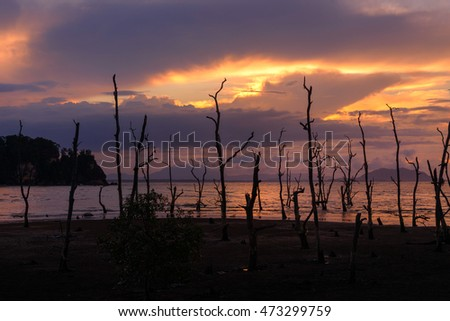 Dead mangrove trees on beach at sunset. Bako National Park, Sarawak. Borneo. Malaysia