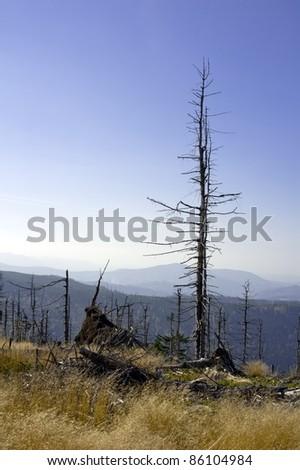 Dead old tree in Poland, Beskid Slaski near the Skrzyczne peak - stock photo