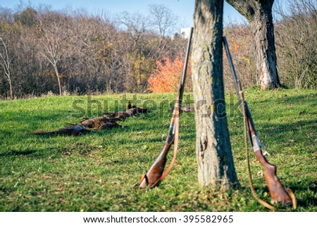 Dead pheasants lying in a grass after successful hunt. Selective focus. - stock photo