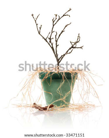 Dead plank in a pot - stock photo