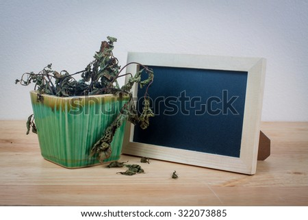 Dead potted plant - stock photo