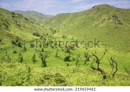 Dead quenoal trees and mist in Lachay hills, national reserve sited near Lima city, Peru. this hills become a green with the sea mist in winter season. - stock photo