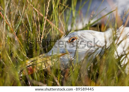 Dead seabird on the coast. Surrounded with grass. - stock photo