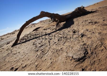 Dead Tamarisk tree branch in the Sahara desert with sand dunes. - stock photo