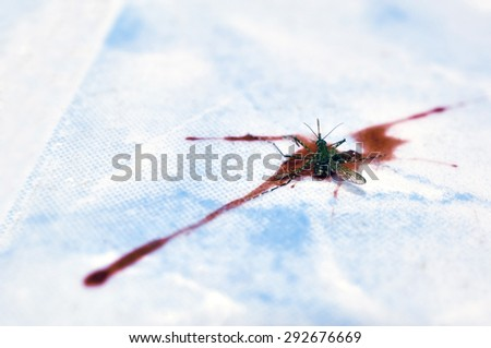 Dead the mosquito on The distribution of human blood - stock photo