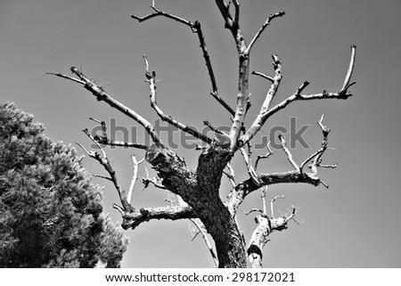 Dead tree  - stock photo