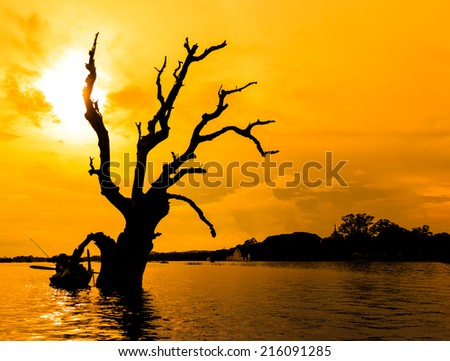 Dead tree and a boat in Mandalay lake,Myanmar