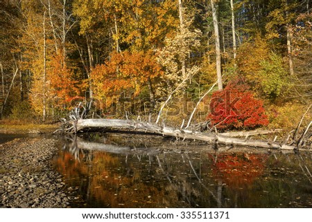 Dead tree and bright reflections of vibrant fall foliage on the shoreline of Mansfield Lake in Connecticut. - stock photo