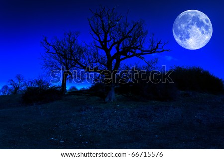 Dead tree at midnight with a glowing full moon - stock photo
