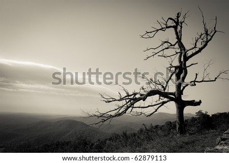 Dead Tree at Shenandoah National Park, Virginia - stock photo