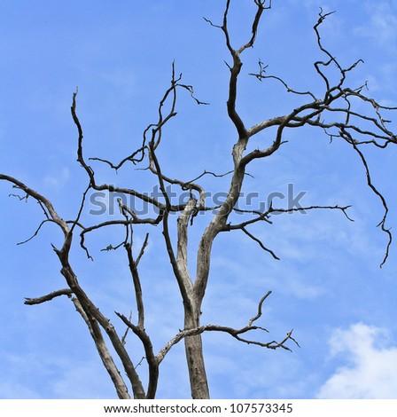 dead tree  background - stock photo