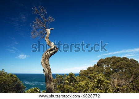 dead tree branch against blue sky with ocean background