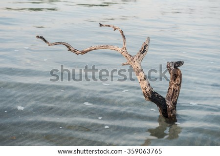 Dead tree branches and trunks in the sea but in a monsoon.   - stock photo