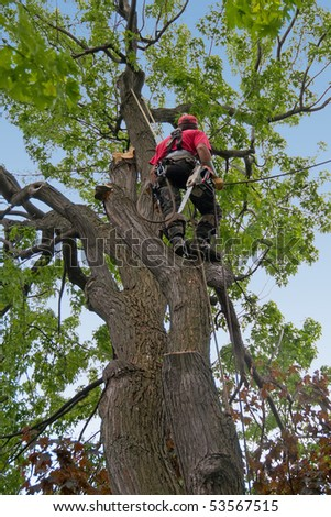 dead tree branches being cut by tree surgeon. - stock photo