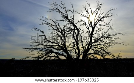 dead tree during cloudy sunset in Utah - stock photo