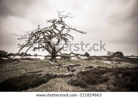 Dead tree in a Dutch  Mooreland - stock photo