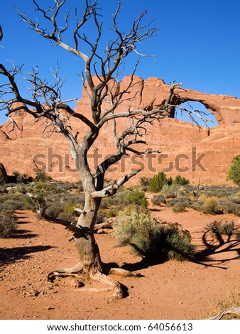 Dead tree in Arches National Park in the Southern Utah desert with Skyline Arch in the background