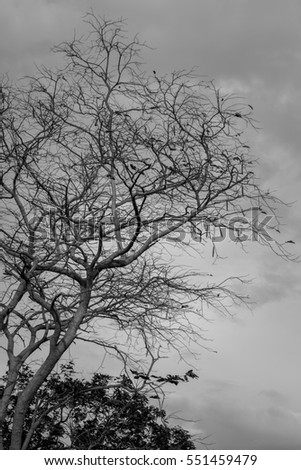 Dead tree in cloudy day,loneliness background