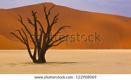 Dead tree in desert landscape of Sossusvlei, Namibia - stock photo