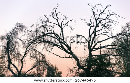 Dead tree in Namib - Namibia, South-Western Africa - stock photo