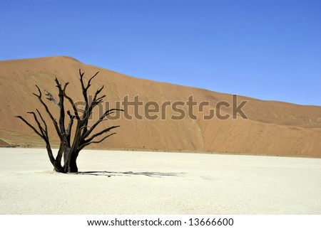 Dead tree in Sossusvlei Namibia - foretaste of global warming? - stock photo
