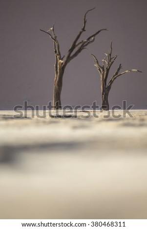 Dead tree in the Deadvlei area of Sossusvlei, Namibia. - stock photo