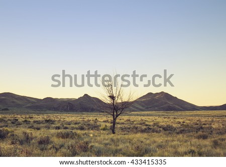 Dead tree in the middle of steppe at sunset - stock photo