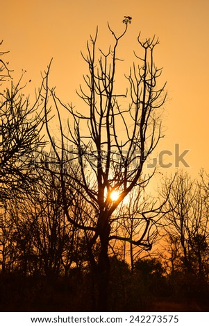 Dead tree in the sunset with a bright orange background