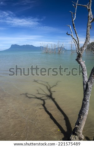 Dead tree in the waters of Bako National Park , Borneo - stock photo