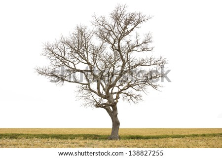 Dead tree isolated at field on summer - stock photo