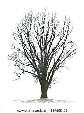 Dead tree isolated on a white background in high resolution - stock photo