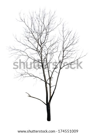 dead tree, Isolated on white  - stock photo
