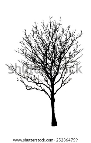 Dead tree isolated on white background with clipping path