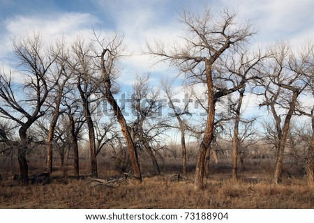 Dead tree landscape in late sun - rural Wyoming - stock photo