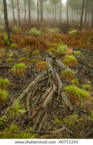 Dead tree lying in the forest amongst greenery - stock photo