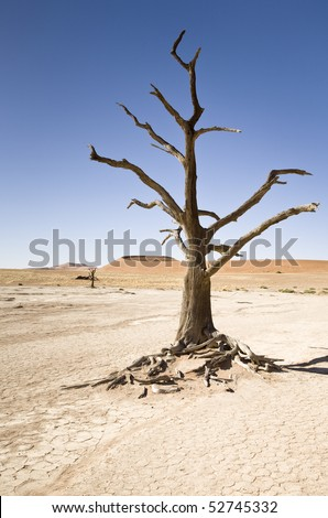 Dead Tree, Namib Desert, Namibia, Africa - stock photo