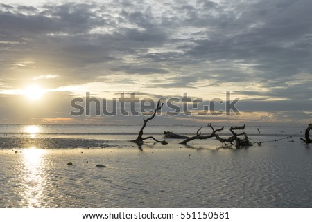 Dead tree on a beach at sunset. Long exposure photography