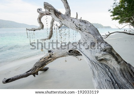 Dead tree on a beach at sunshine, Thailand - stock photo