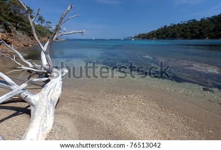 Dead tree on a beach on an island in mediterranean sea. Port Cros national park, France - stock photo