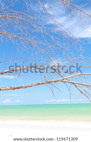 Dead tree on beautiful beach - stock photo