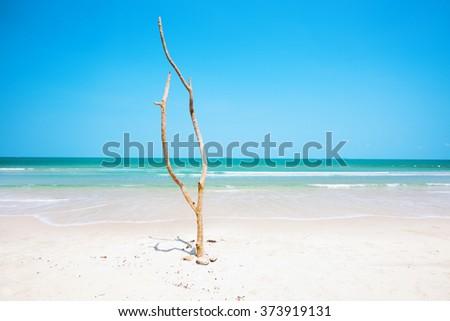 Dead tree on beautiful beach - stock photo