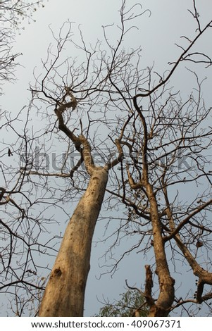 Dead tree on forest in thailand