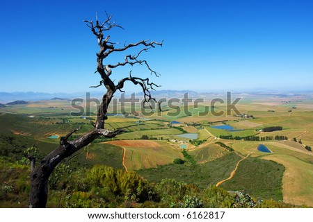 Dead tree on mountain and rural landscape with lakes. Shot in Kasteelberg Mountains nature reserve, near Riebeek, Western Cape, South Africa. - stock photo