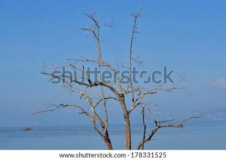 Dead tree on the beach - stock photo